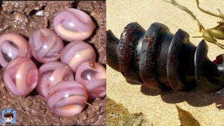 10種最外形離奇的動物蛋,繁殖方式一定讓你大開眼界!