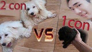 Laytv - Thi Đấu THÚ CƯNG 1 Chấp 2 - pet contest 1vs2