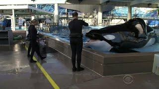 SeaWorld killer whale Tilikum dead