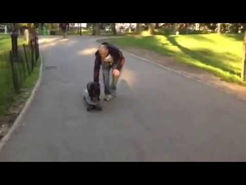 LONGBOARD FOR A LONG DOG