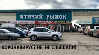 Птичий рынок Садовод в Москве Рынки Москвы