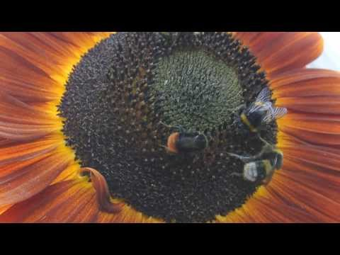 Sex Rekord im Guinness-Buch Video aufgeführt