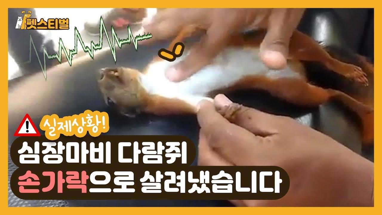 '심장마비' 온 다람쥐, 손가락 응급처치로 살려낸 사연