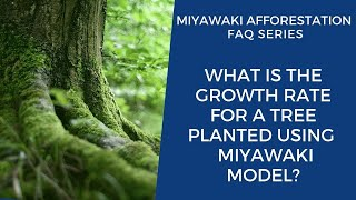 What is the Rate of Growth for A Tree Planted Using Miyawaki Model?