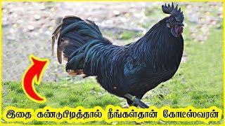 பூமியில் வாழும் 9 விலைமதிப்பற்ற உயிரினங்கள்    top 9 expensive animals in the world in tamil