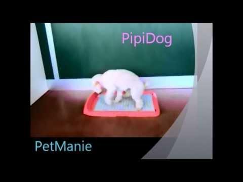 PipiDog WC per cani : Promo + dimostrazione