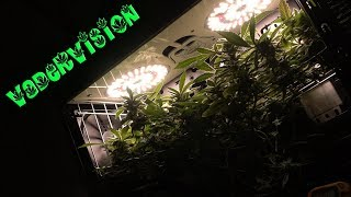 Cannabis PC Micro Grow Flower Cycle and Harvest!