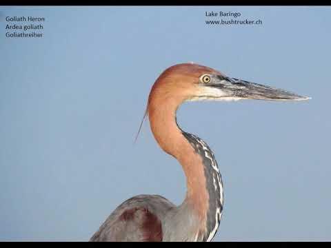 Birding tour - best birding places in Kenya