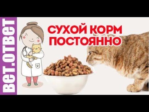 Можно ли кормить кошку сухим кормом постоянно? Аллергия на корм. Вет Ответ.