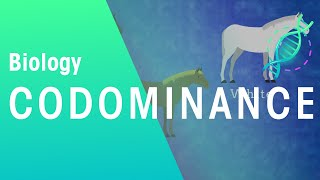 Codominance | Biology For All | FuseSchool