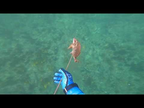WildBorn Oz - Spearfishing Catherine Hill Bay NSW