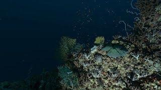 How Do Scientist Divers Explore the Twilight Zone? | California Academy of Sciences