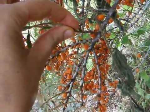 Carrots at hair mask