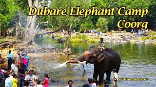 Bathing Elephants in Dubare Elephant Camp | Coorg, Karnataka, India