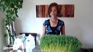 Wheat Grass Part 2