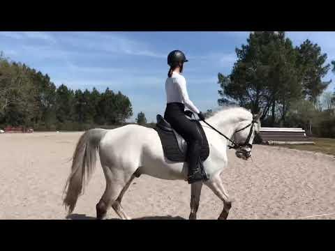 Super poney de CCE