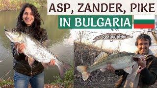 ASP, ZANDER, PIKE Fishing in Bulgaria - Best Moments/ Риболов на РАСПЕР, ЩУКА, БЯЛА РИБА в БЪЛГАРИЯ