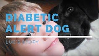 Diabetic Alert Dog: Luc's Story