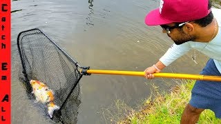 CATCHING GIANT $4,000 KOI FISH in CITY CANAL! new PET