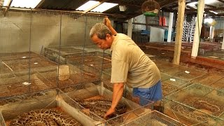 Tin tức 24h | Cà Mau: Gian nan bảo vệ rừng ven biển