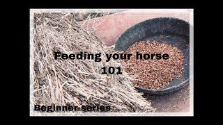 FEEDING YOUR HORSE 101 - FOR BEGINNERS