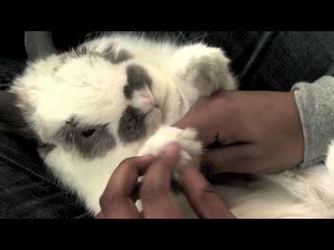 Anteprima Video Come si tagliano le unghie al Coniglio