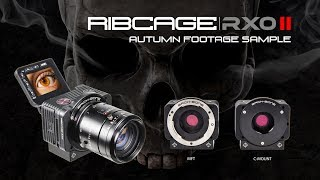 Ribcage RX0 II - Autumn Footage Sample