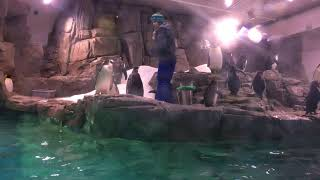 Albuquerque BioPark - Penguin Chill Exhibit 2019