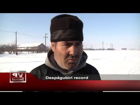 Despagubiri record