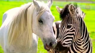 Топ 10 самых редчайших животных на планете
