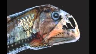 Самые страшные и необычные животные на планете