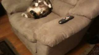Fat Cat Cant Get Up!