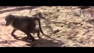 Пьяные обезьяны!