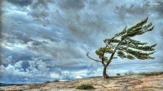 Wind Sound Effects - Efek Suara Angin