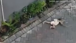 Caught on camera: Bike-riding monkey grabs toddler in Indonesia