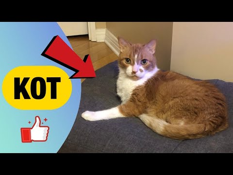 Что делать, если кот тяжело дышит. Диагностика и лечение. Ветеринария в Канаде