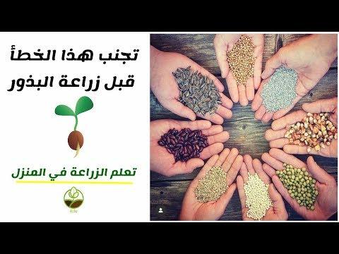 , title : 'لا ترتكب هذا الخطأ عند زراعة البذور و تجنب فشل الزراعة. (تجربة عملية)