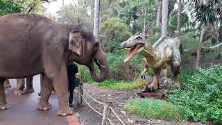 Dinosaurs and Elephants
