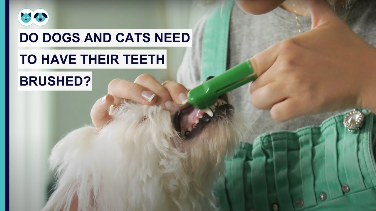 Do Dogs and Cats Need to Have Their Teeth Brushed?