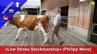 Low Stress Stockmanship – Philipp Wenz demonstrates how to handle cattle without stress