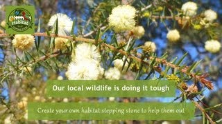 What is Habitat Stepping Stones?