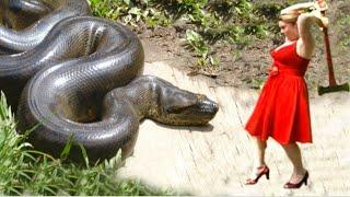 हिम्मत वाले देखें !! geatest  in the world ever born  !! Animals and biggest animals