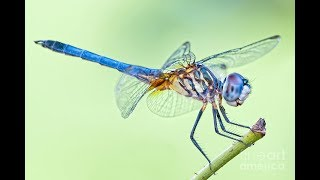 50 Most Beautiful Dragonflies In The World