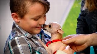 Get an inside look at our Adoption Center and watch adorable adoptables