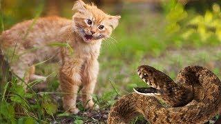 Смертельная схватка кота с удавом