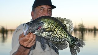 Shallow Crappies / Some Huge Ones / Crappie Fishing