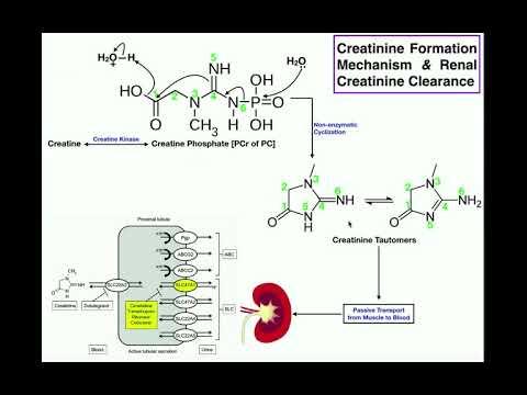 Milyen vitaminok inni a prosztatitisben