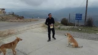 preview picture of video 'Galoogah Road Mazndaran , Iran# '