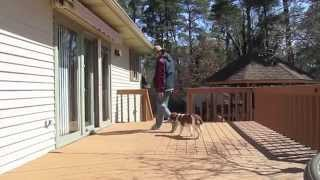 Basic Dog Training with a 7 month old puppy | Follow The Leader Dog Training and Rehabilitation LLC