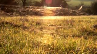 Moving Stills - Grass Webs